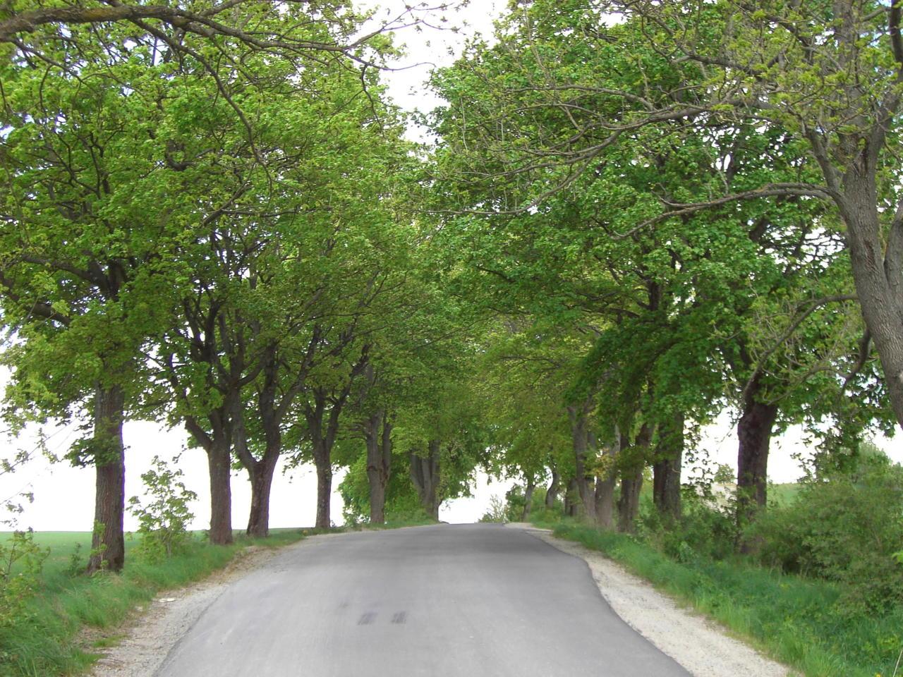 Bäume an der Straße nach Crock